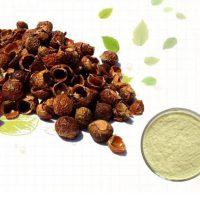 מה הם אגוזי סבון - Reetha