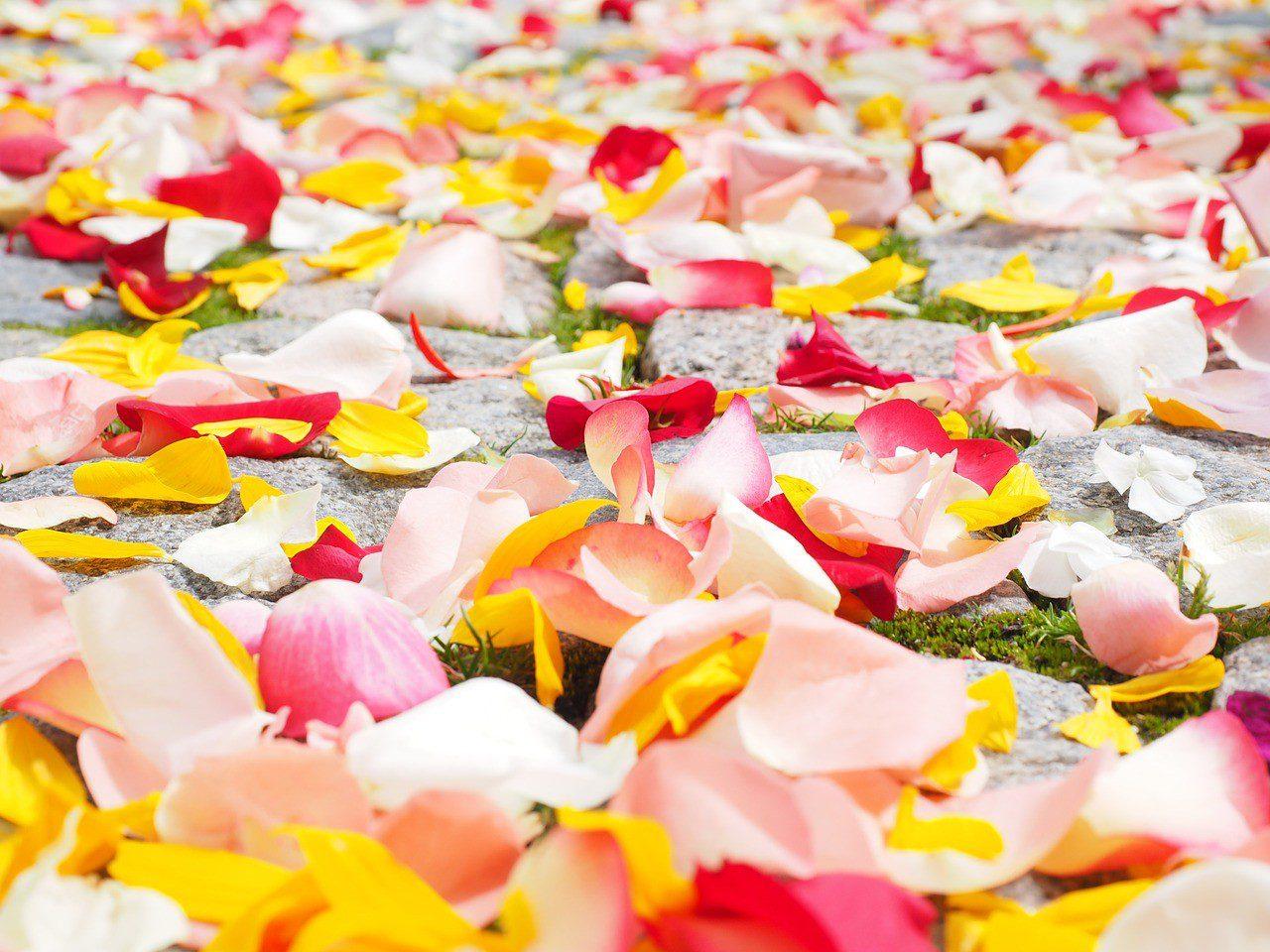 אבקת ורדים – Rose Petal