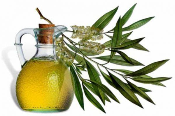 שמן עץ התה נחשב למחטא עצמתי ובעל יעילות נגד פטריות וחיידקים.